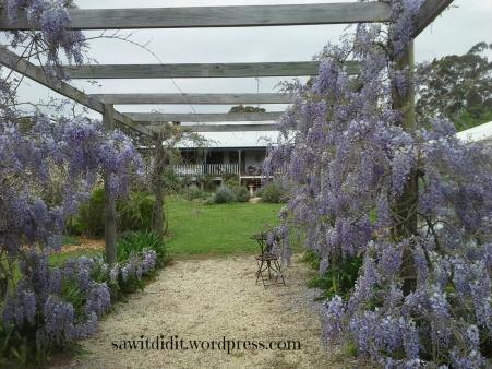 Garden arch wisteria walk sawitdidit.wordpress.com (1024x768)