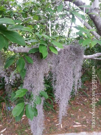 Halloween Spanish Moss . sawitdidit.wordpress.com