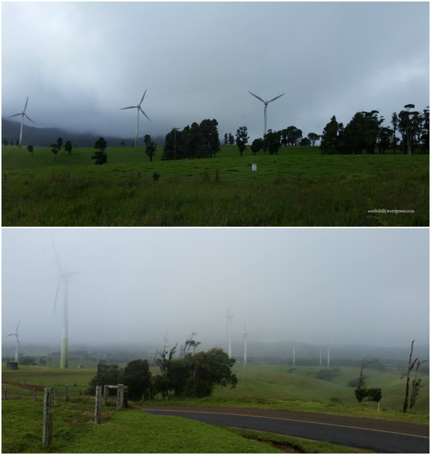 windy-hill-qld-wind-farm