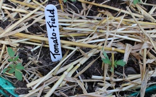plant marker4