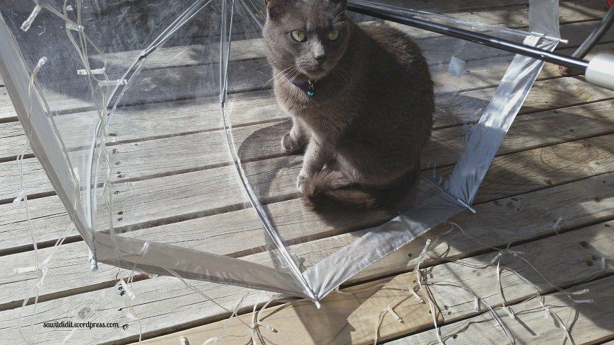 UFO cat in umbrella
