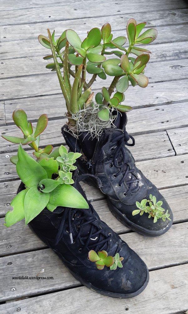 succulent boots