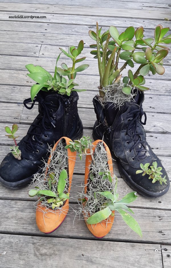 succulent boots and shoes