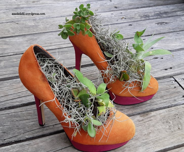 succulent shoes