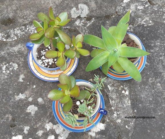 succulent teacups 2 (1)